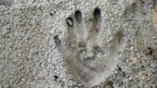 В России подорожал цемент