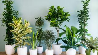 Комнатные растения сделают вашу жизнь чище!