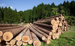 26—27 апреля 2017 г. в Санкт-Петербурге состоится обучающий семинар для лесозаготовителей