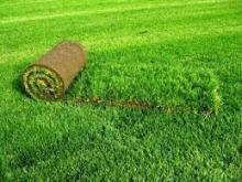 Выращивание газонной травы, особенности и нюансы